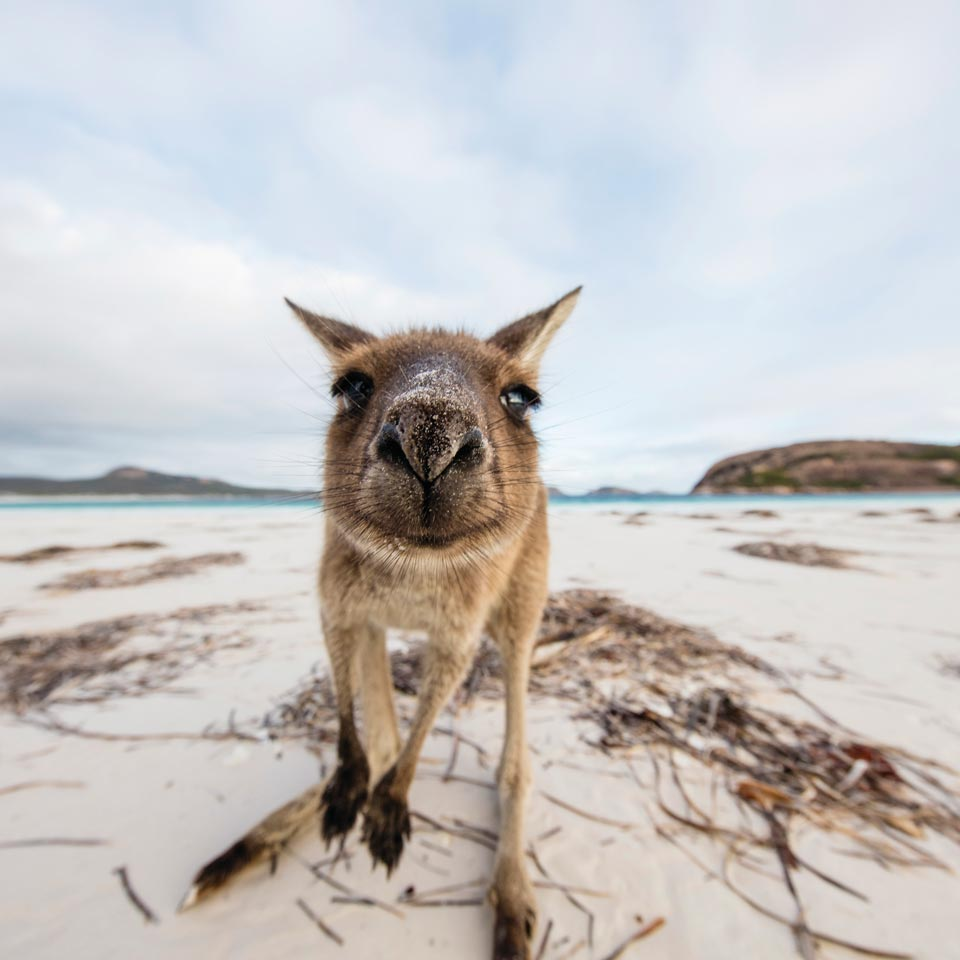 Photo credit (Tourism Western Australia). Location displayed (Lucky Bay, Cape Le Grand National Park, Western Australia).