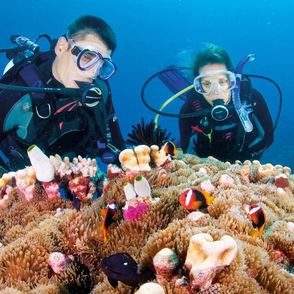 Photo credit (Tourism and Events Queensland). Location displayed (Great Barrier Reef, Queensland).