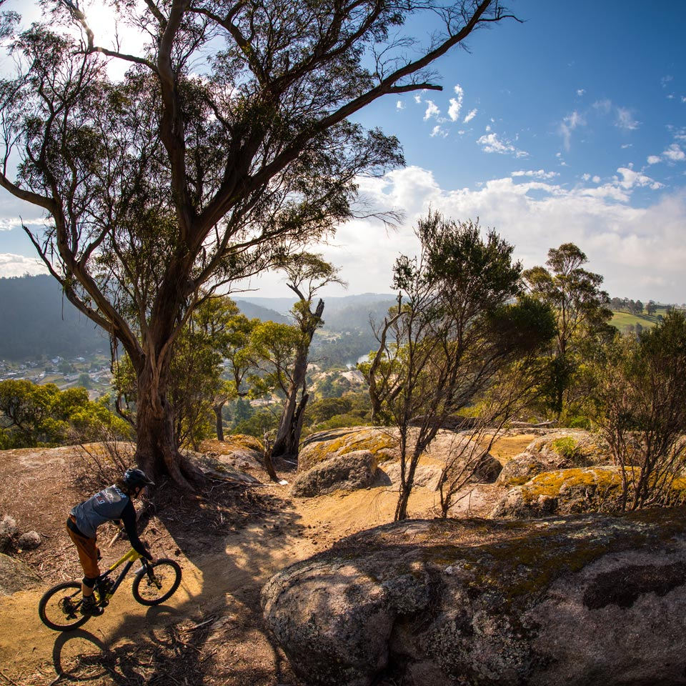 Photo credit (Tourism Tasmania). Location displayed (Blue Derby Mountain, Tasmania).