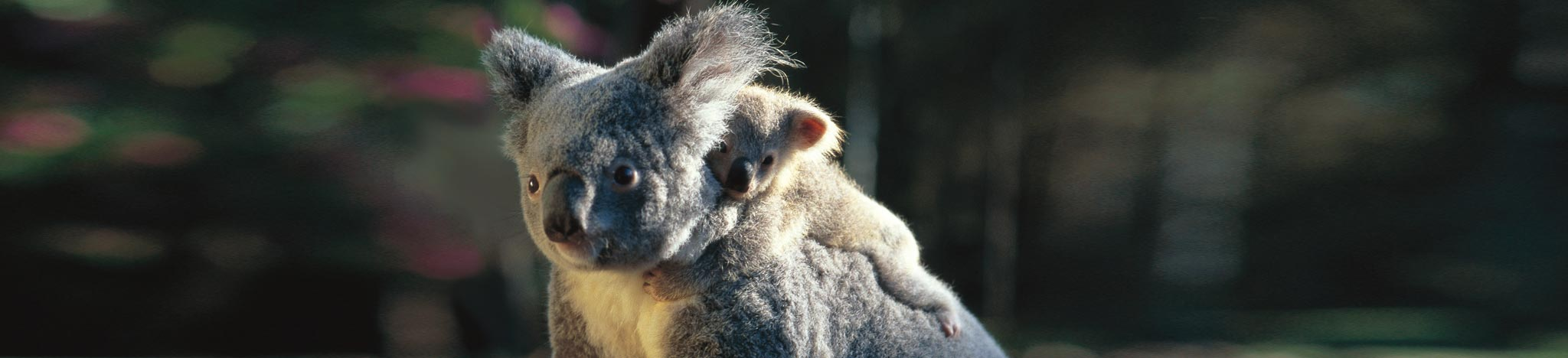 Australia Wildlife Vacation - Latitude South Luxury Travel