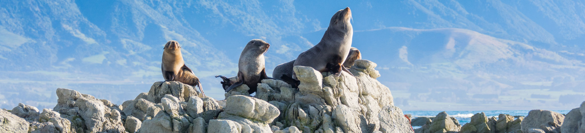 New Zealand Luxury Honeymoon - Romance Vacation